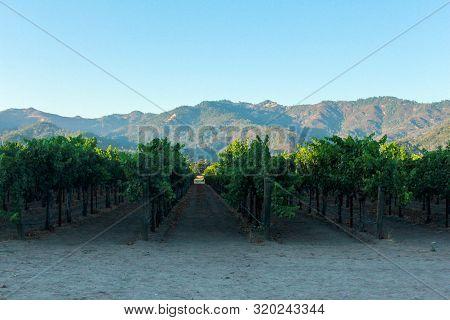 Vineyards Of Napa Valley / Sonoma Region, California