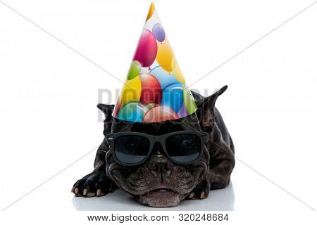 cute little French bulldog laying down with a smirk on his face wearing sunglasses and birthday cap on white studio background