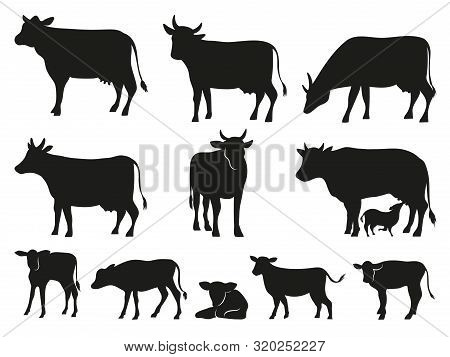 Cow Silhouette. Black Cows And Calf Mammal Animals. Pictogram. Farm Livestock Cow Pictogram Or Count