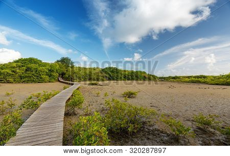 The Path Crossing The Mangrove Towards The Beautiful Wild Beach Anse Michel For Travelers In Search