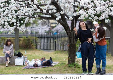 OSAKA, JAPAN, April 7, 2019 : Japanese women are taking selfie pictures under flowered cherry trees at the Kema Sakuranomiya Park to celebrate new spring .
