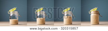 Collage Of Four Photos Of Home Made Starter Yeast Growing And Rising In A Glass Jar.
