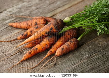 Fresh Unwashed Carrots With Greens On Old Wooden Planks