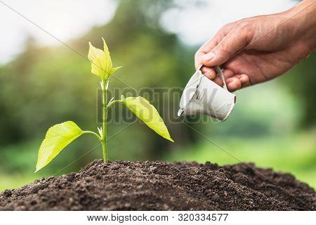 Hands Of Farmer  Nurturing Tree Growing On Fertile Soil,  Maintenance Of Growing Seedlings,  Hands P