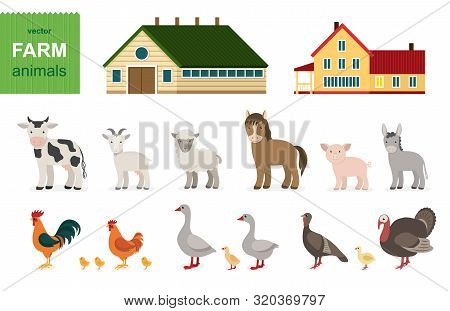 Cute Farm Animals Set. Сartoon Animals Collection In Flat Style Isolated On White Background: Cow, H