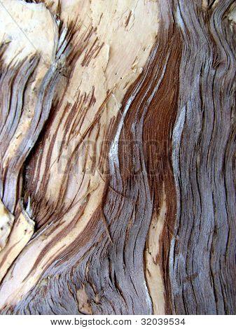 Macro photograph of bark from Paperbark Tree