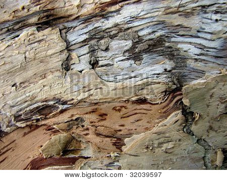 Paper bark Tree Patterns 1