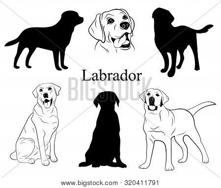 Labrador Set. Collection Of Pedigree Dogs. Black White Labrador Dog Illustration. Vector Drawing Of