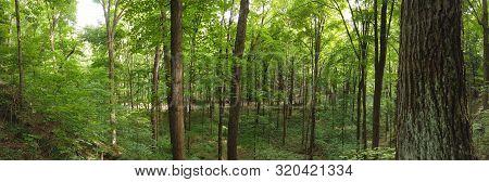 Panoramic View Hiking Park, Beautiful Green Trees