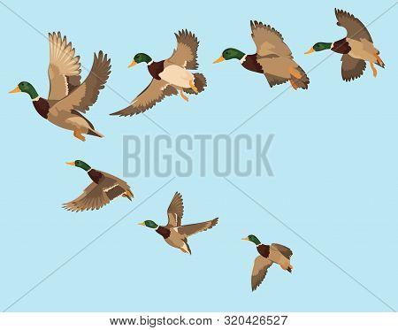 A Flock Of Ducks. A Cartoon Flock Of Birds. Vector Illustration Of Flying Birds. Drawing For Childre