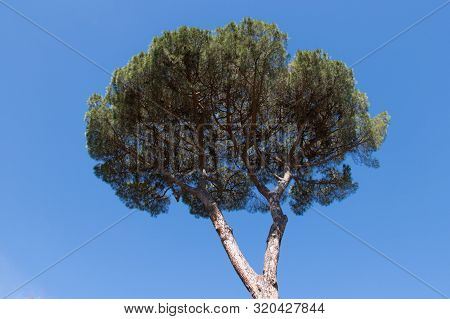 The View Of  Apine Crone With Blue Sky On Background.