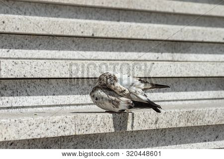 Pigeon Hid His Head Under The Wing, Environmental Problem In City