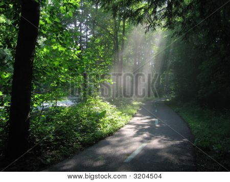 Sunlight through the woods on a biking path in the Cleveland Metroparks Ohio poster