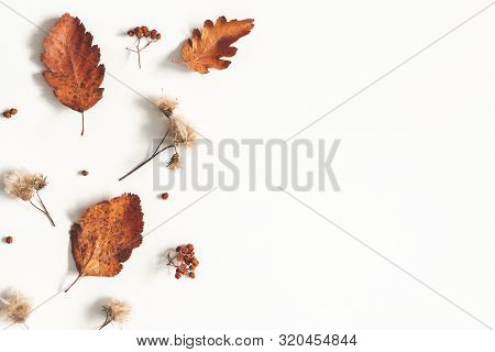 Autumn Composition. Dried Leaves, Flowers, Rowan Berries On White Background. Autumn, Fall, Thanksgi