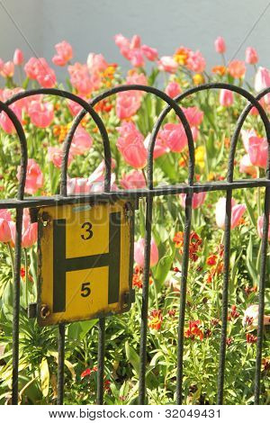 Pink tulip flowers behind metal fence with sign