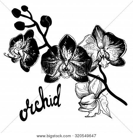 Greeting Card With Hand Drawn Spotty Orchid Flowers On White Background And Brush Pen Lettering Call
