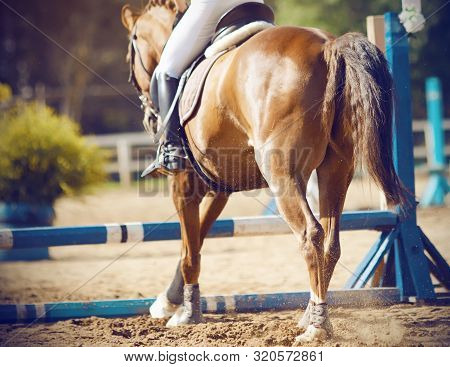 A Bay Beautiful Horse With A Rider In The Saddle Is Going To Jump Over The Blue Low Barrier, Running