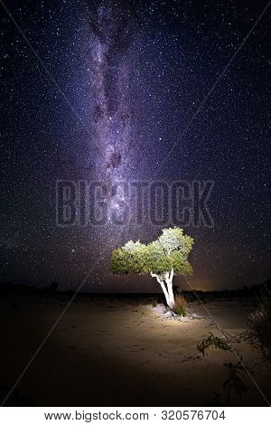 Lone Tree In The Australian Outback Desert Under A Sky Full Of A Billion Stars, The Galactic Core Of