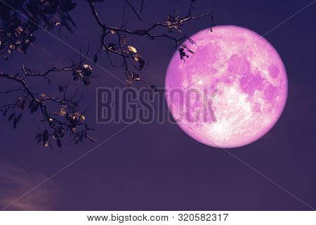 Buck Pink Moon On Night Red Sky Back Silhouette Tree