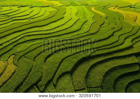Paddy Rice Terraces, Agricultural Fields In Countryside Or Rural Area Of Mu Cang Chai, Yen Bai, Moun