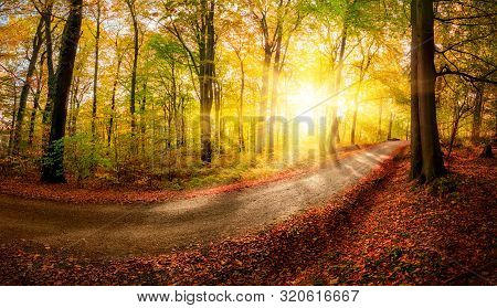 Autumn Landscape Shot Of A Footpath In The Forest Before Sunset, With The Foliage Shining Gold In Th