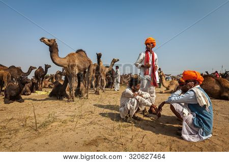 PUSHKAR, INDIA - NOVEMBER 20, 2012: Indian men in traditional turbans and camels at Pushkar camel fair Pushkar Mela annual camel livestock fair one of world largest camel fairs and tourist attraction