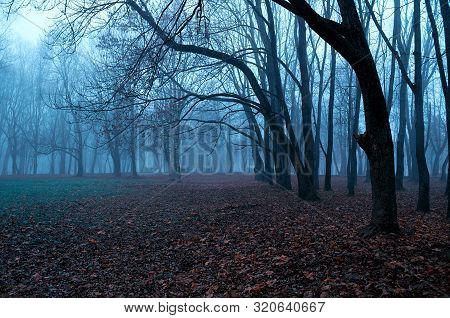 Autumn mysterious landscape - foggy forest with bare trees and fallen red autumn leaves on the ground, misty park scene