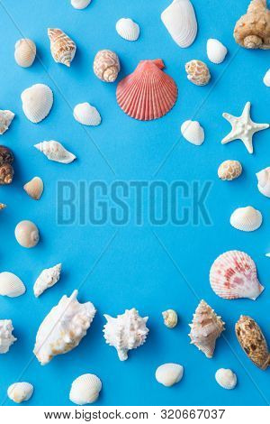 sealife and summer concept - frame of different sea shells on blue background