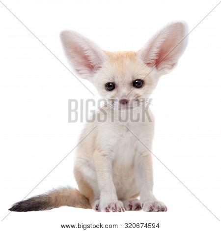 Pretty Fennec Fox Cub On White Background