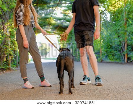 Young Couple Walking With Dog On A Leash On Asphalt Sidewalk. Strong Black Labrador And Stafford Ter