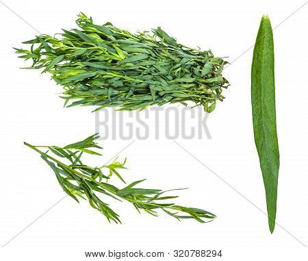Various Leaves And Twigs Of Tarragon (estragon) Herb Isolated On White Background