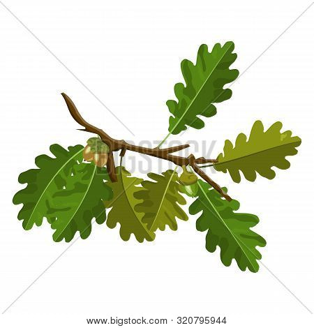 Oak Tree Branch With Acorn And Green Oak Leaves Vector Images Isolated On White