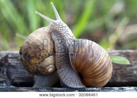 Snail Fight