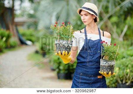Serious Pensive Female Gardener In Denim Apron Looking At Pot With Blooming Flower In Her Hand