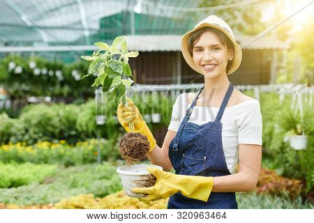 Portrait Of Happy Pretty Woman In Hat And Apron Taking Flower Out Of Pot To Plant It In Soil In Gard
