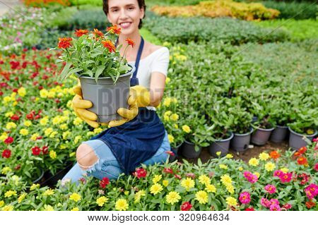 Cheerful Young Woman Working In Nursery Garden And Showing Pot With Beautiful Blooming Flower
