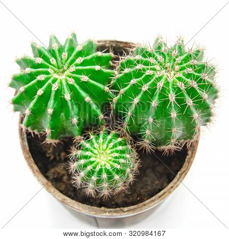 Cactus In Pot Isolated On A White Background