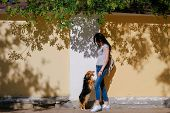Woman and her dog on background of wall with contrast shadows. Funny spaniel mutt standing on hind paws poster
