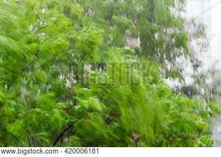 Blurred Branches Of The Deciduous Trees During Strong Gusts Of Wind Before The Summer Storm, Fragmen