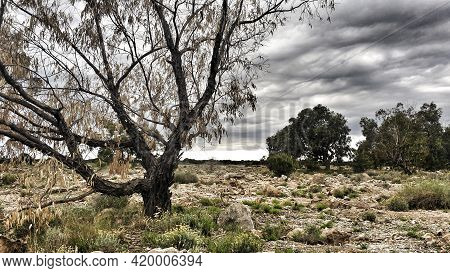 Countryside Landscape With Cloudy Sky And Native Bushes And Conifers In Alicante, Spain