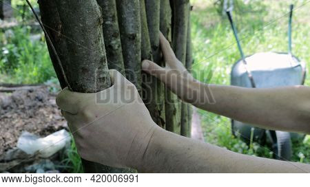 Male Hands Making A Fence From Thin Textured Logs Against The Background Of A Summer Garden Landscap