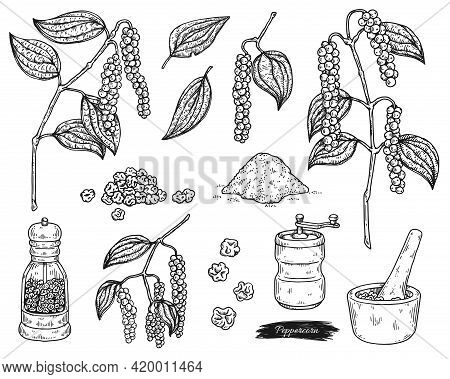 Peppercorn And Utensils For Grinding, Engraving Vector Illustration Isolated.