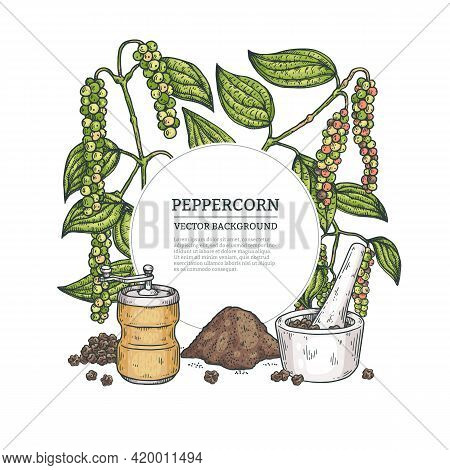 Frame Or Banner With Peppercorn Plant, Engraving Vector Illustration Isolated.