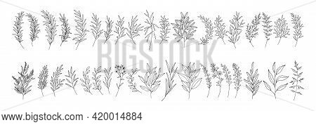 Leaves Set, Line Art Hand Drawn Branches. Meadow Herbs, Wild Plants, Twigs, Botanical Elements For D
