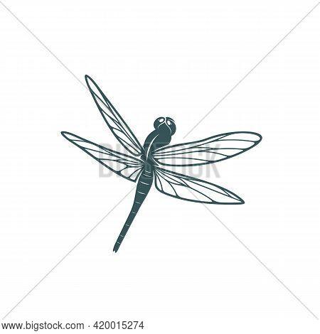 Dragonfly Design Vector Illustration, Creative Dragonfly Logo Design Concept Template, Symbols Icons