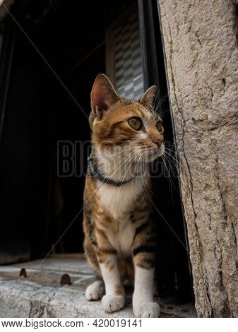 Curious Young Kitten Domestic Cat Sitting In Doorstep Of Historic Stone House Shop In Venice Venezia