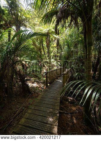 Panorama Of Lush Green Bush Walkway Wooden Path Bridge At Waiau Kauri Grove Track At 309 Road Coroma