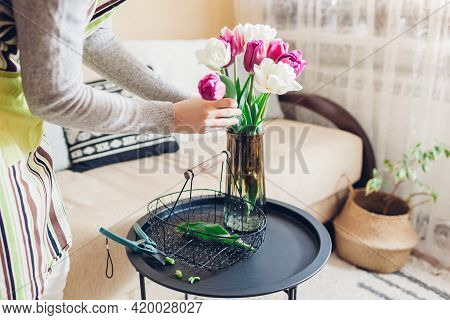 Woman Puts Bouquet Of Purple And White Tulips Flowers In Vase With Water At Home. Fresh Blooms In Ar