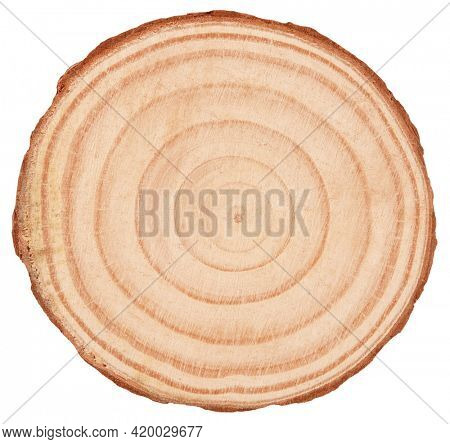 Rings on wooden log cross section wooden background