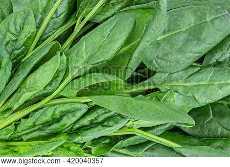 Spinach Leaves Texture As A  Background.  Fresh Green Spinach Leaves Closeup
